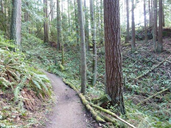 Lake Padden Park: Upper trail