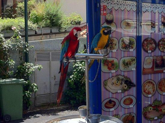 Restaurante Terrace d'Ajuda: Perroquets à l'entrée du restaurant.
