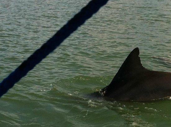 Dolphin Connection Texas: Dolphin Connection