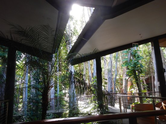 Kewarra Beach Resort & Spa : view from the main restaurant