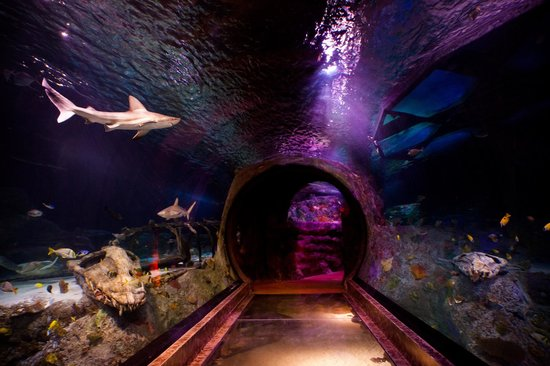 Grapevine, TX: Take a walk across our ocean tunnel
