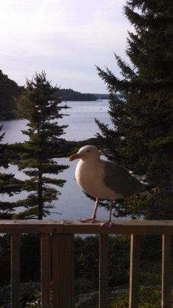 Ocean Gate Resort: A visitor