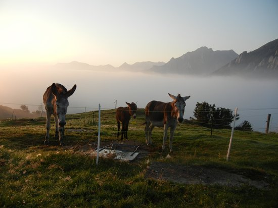 Chalet du Soulor : Les ânes à côté du chalet