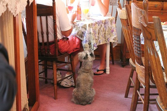 Bayberry Inn - Ocean City : (There were dog treats on the table)
