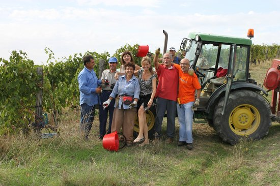 B&B Fagiolari: harvesting grapes for future vintage