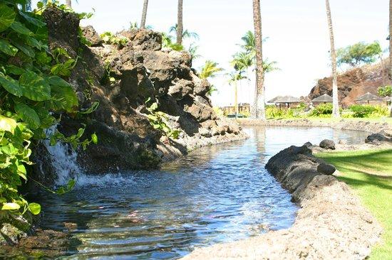Sheraton Maui Resort & Spa: Lagoon