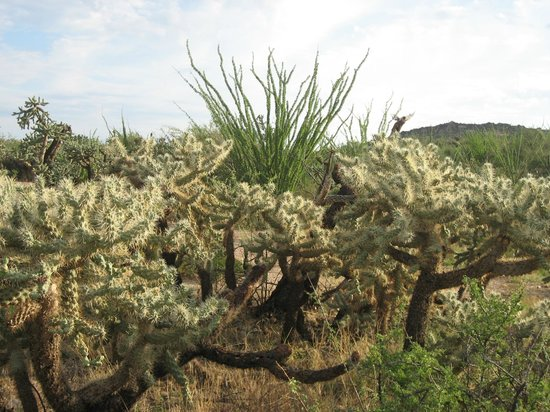 Miraval Arizona Resort & Spa : Scenes from the Outback Hike