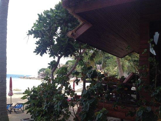 Palm Leaf Resort: The beach