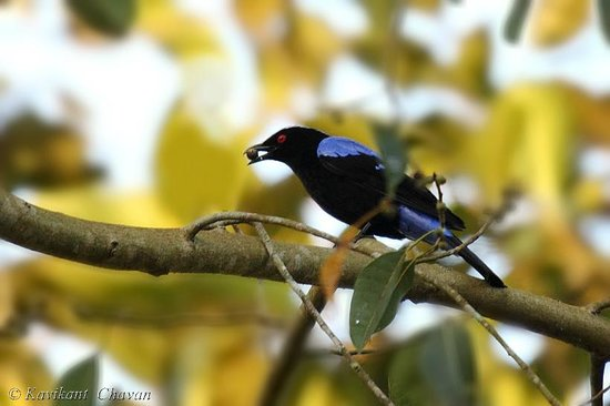 Aashirvad's Pleasant Stays: asian blue fairy Male - Clicked from Dining area