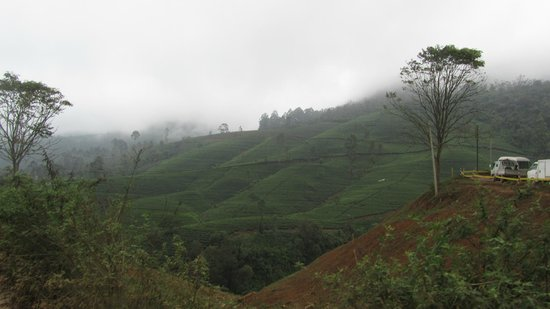 The Ingle Wood: beautiful valley outside our hotel,,,,