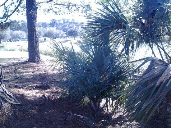 Lake Mayer Community Parks: Sub-tropical greenery