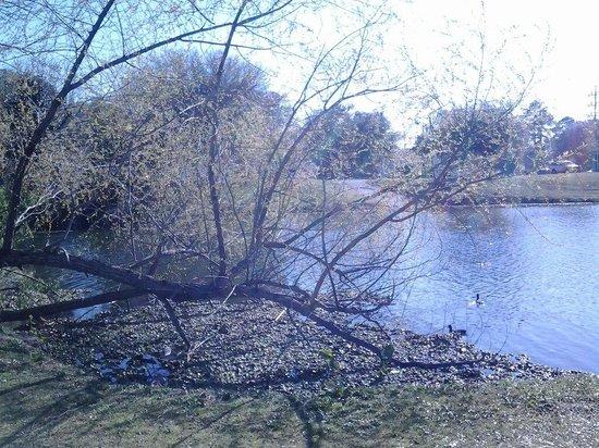 Lake Mayer Community Parks: By the lake