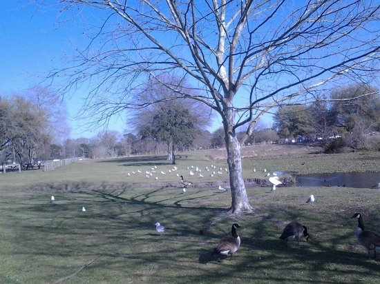 Lake Mayer Community Parks: Looking across the picnic grounds on one side