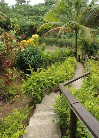 Naveria Heights Lodge: Footpath leading downhill into Savusavu