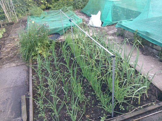 Linthorpe B&B: veg garden