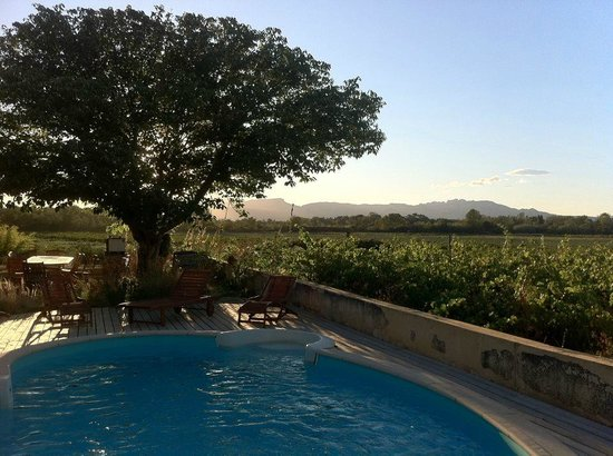 Domaine Rouge-Bleu : Vine and pool / Vigne et piscine