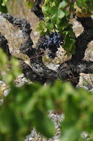 Domaine Rouge-Bleu : Old Vine, une vieille vigne
