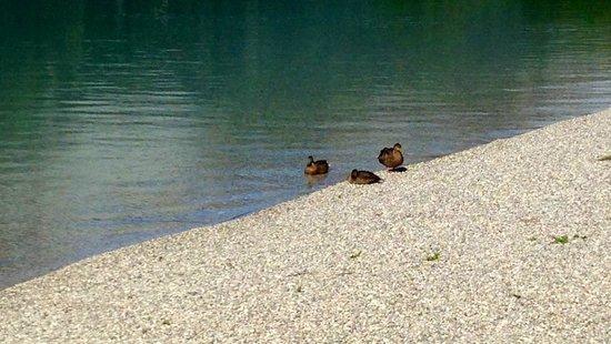 Valle di Ledro : Il lago in estate