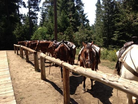 Shaver Stables: horses
