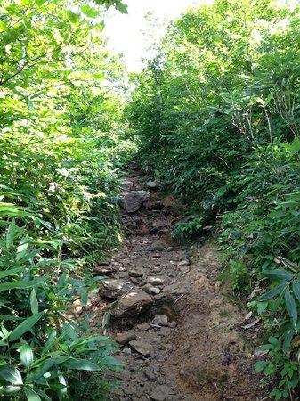 Tanigawadake: 天神峠からの下り道