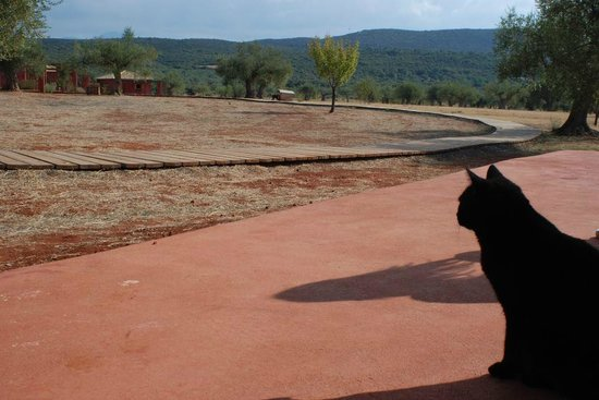 Eumelia Organic Agrotourism Farm & Guesthouse: Through a Cat's eyes..