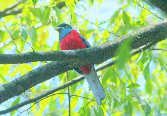 Shiluvari Lakeside Lodge : Narina Trogon