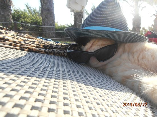 Queen's Bay Hotel: Hotel cat a bit of fun