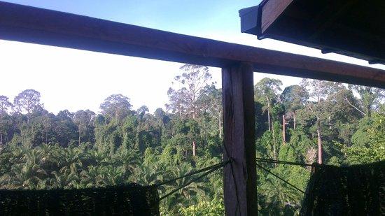 Bilit Village Homestay: Uitzicht van onder de douche!