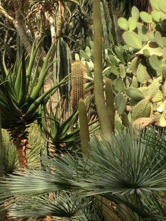 Huerto del Cura palm park detail - Picture of Huerto Del Cura Jardin Artistic...