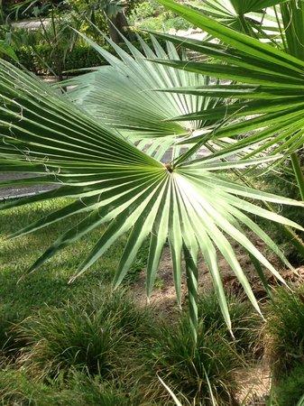 Jardín Artístico Nacional Huerto Del Cura: Huerto del Cura palm park detail