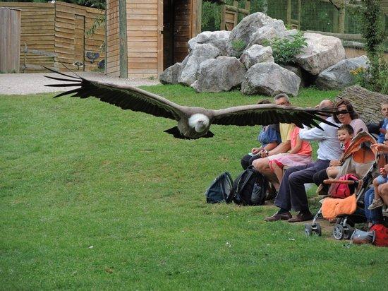 Les Aigles du Leman: Spectacle de fauconnerie