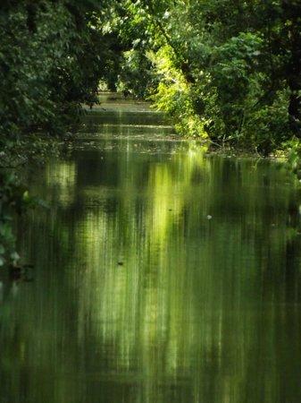 Les Oiseaux du Marais Poitevin: Vue du marais..; depuis le bateau