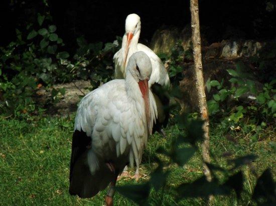 Les Oiseaux du Marais Poitevin: cigognes...