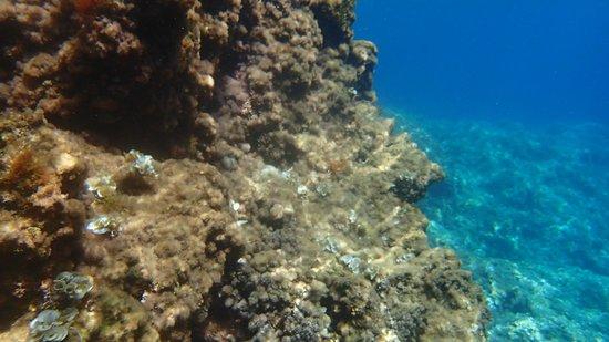Cetaria Diving Center : rocce