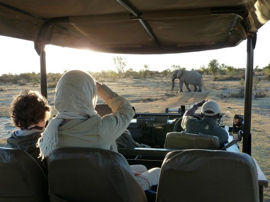 Jaci's Safari Lodge: Elephant on an evening game drive