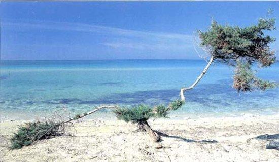 Alloggio in Villa Cristina: spiagge del luogo