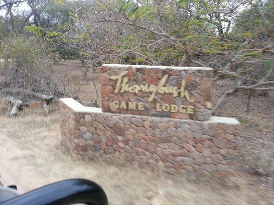 Thornybush Game Lodge