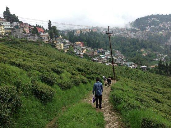 Happy Valley Tea Estate: A walk through Happy valley
