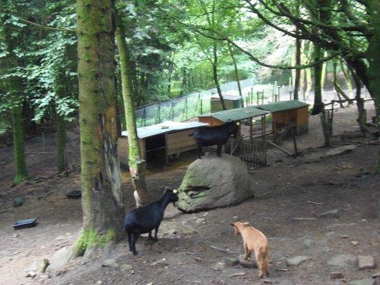 Wolves of Gueret: Plus de chèvres et autres animaux que de loups