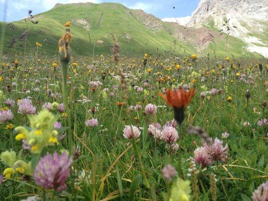 Residence Rododendro : I prati del Passo San Pellegrino