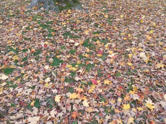 Brattleboro Common: Fall Natural carpet