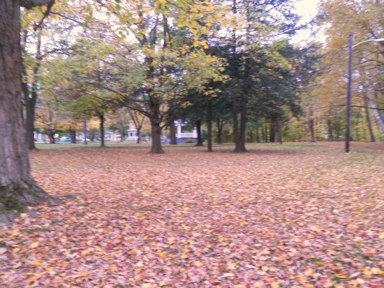 Brattleboro Common: Natural carpet