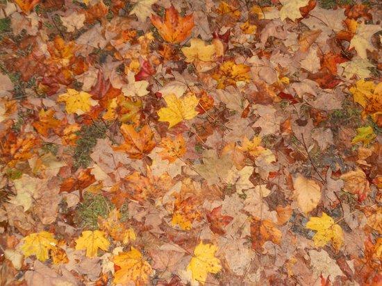 "Brattleboro Common: ""When the leaves come falling down"""