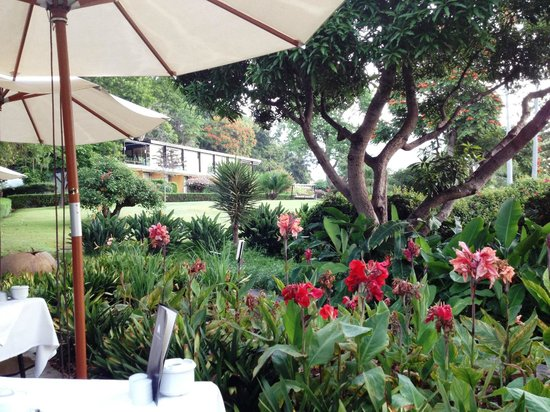 Quinta da Casa Branca: Le jardin depuis le PDJ