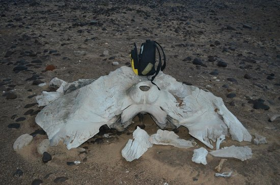 NWR Terrace Bay Resort: One of the numerous whale skeletons on the nearby beach