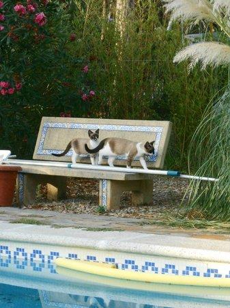 Casa la Felicidad: Some of the house pets