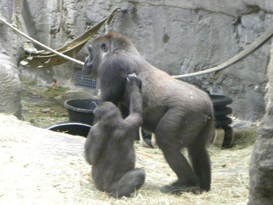 The Buffalo Zoo: I want a ride.