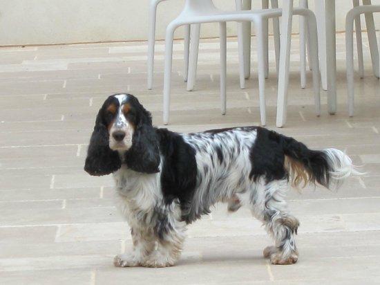 Hotel l'Armateur : Hotel dog