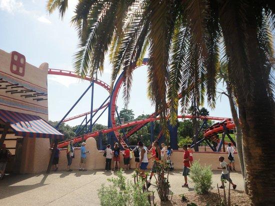 Busch Gardens Tampa: Sheikra