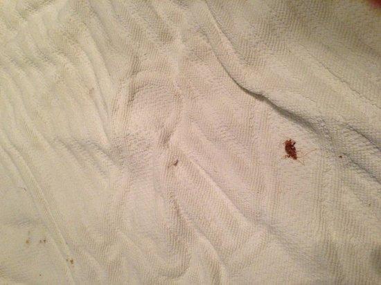 Apartments Milic: Fósil de cucaracha en baño